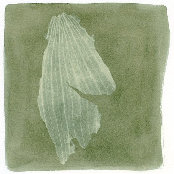 Onion skin, 2012. Gum bichromate print.