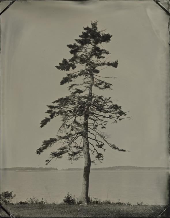 saras_tree_010