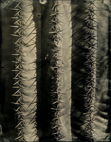 Saguaro, detail
