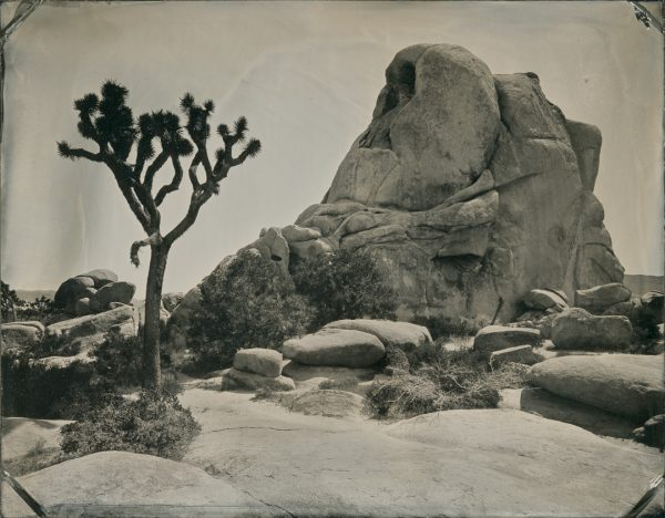 Yes, I did manage to make a tintype of an actual Joshua Tree in Joshua Tree National Park.