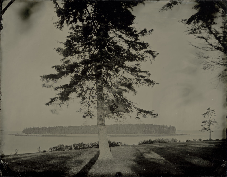 ash_island_second_tree_001