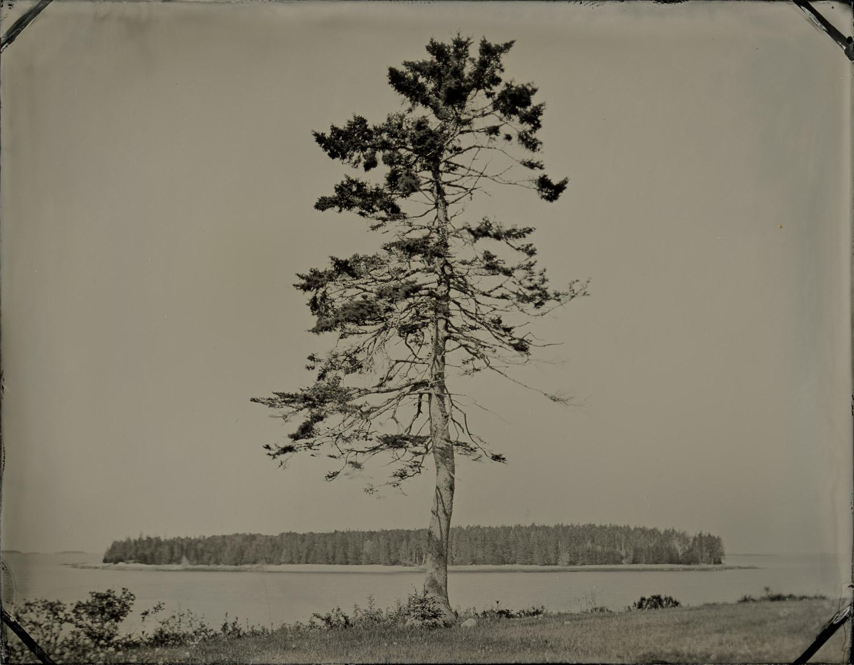 ash_island_tree_004