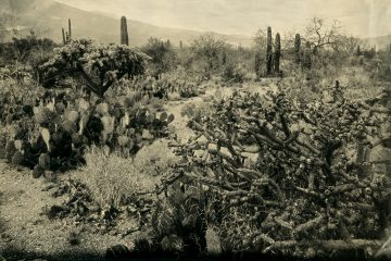 Saguaro National Park, Part 2