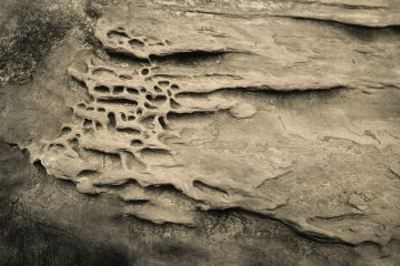 Great Tintype Adventure of 2018